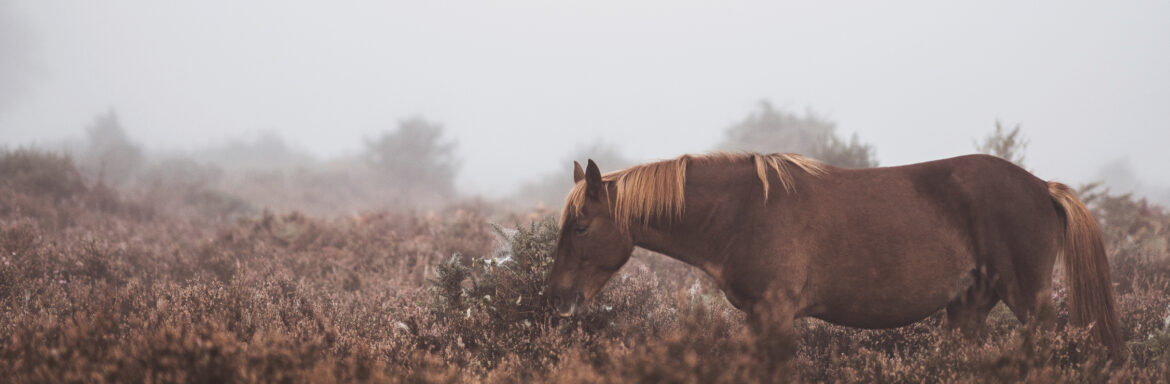 Do You Often Dream About a Horse or a Lion? This is What it Means