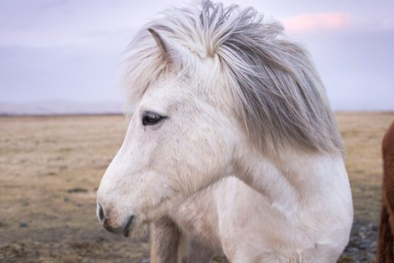 Do you dream about a horse or a lion a lot? This is what it means