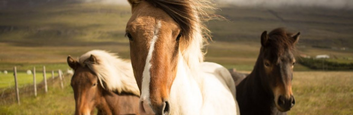 This is Why Horses Bring Us Happiness (It's Not Just Their Good Looks and Nice Smell)